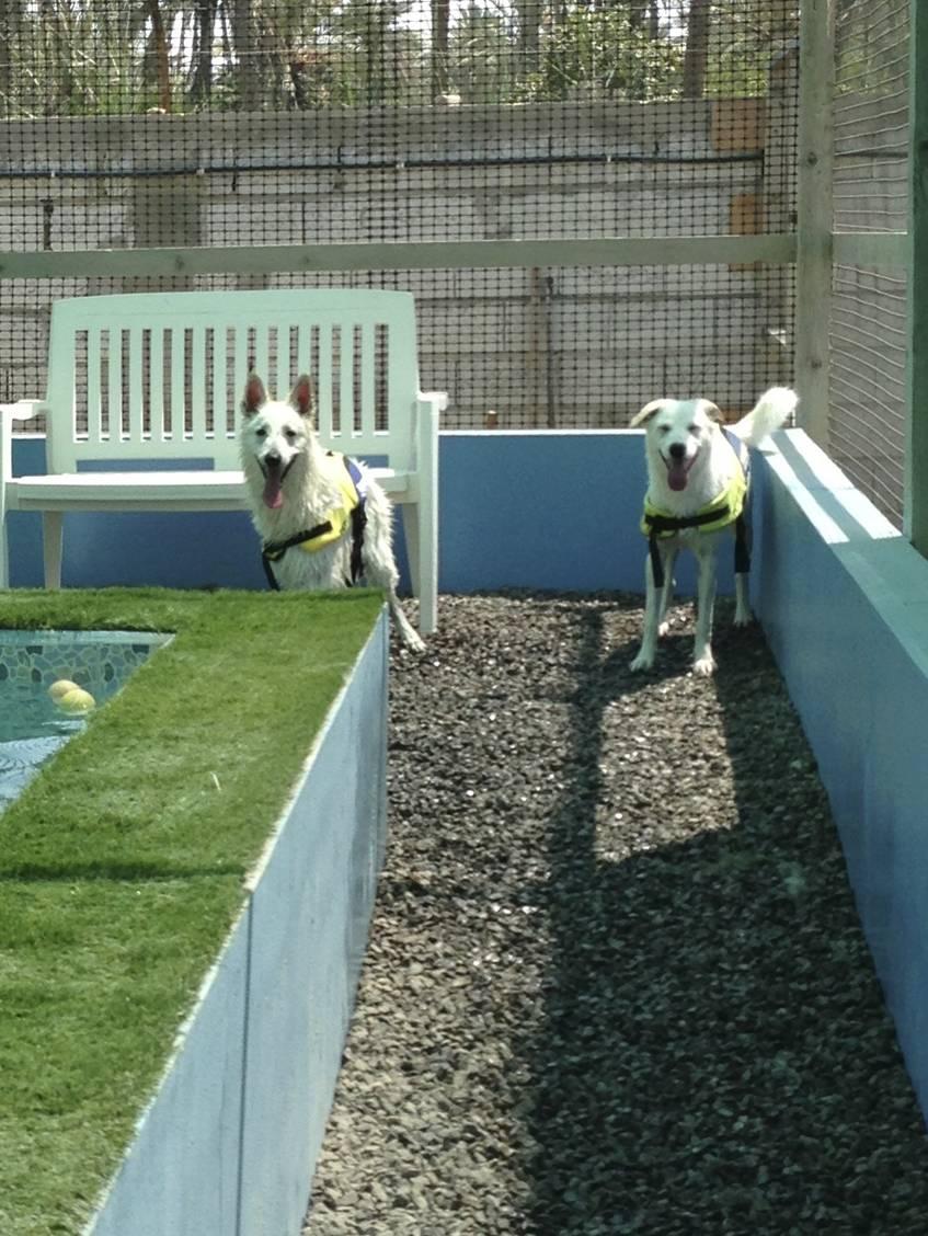 dogs having a bath