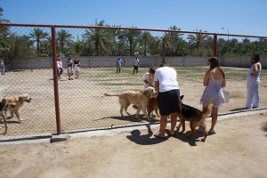 Dogs Ver (18)